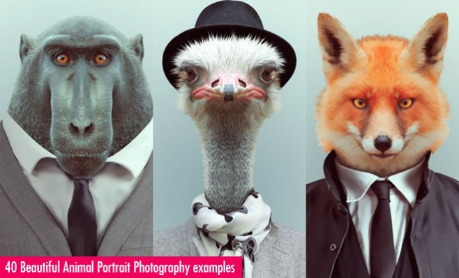 Animal Portrait Photography