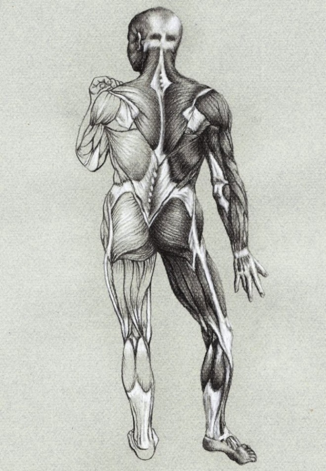 Study of Anatomical Structure Drawings -Best Tutuorial – by Veri ...
