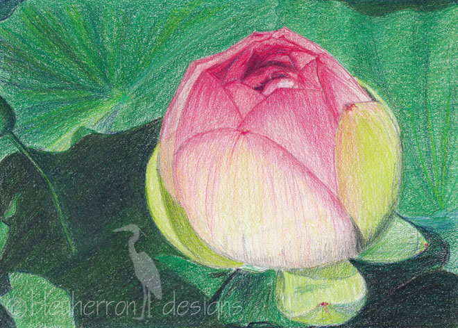 35 Beautiful Flower Drawings and Realistic Color Pencil ...  35 Beautiful Fl...