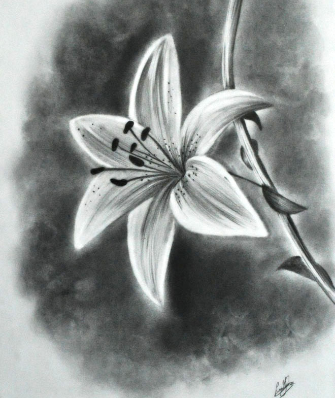 Easy Drawings Of Flowers In Pencil 35 Beautiful Fl...
