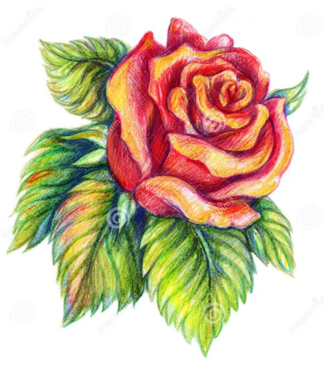 35 Beautiful Flower Drawings and Realistic Color Pencil ...