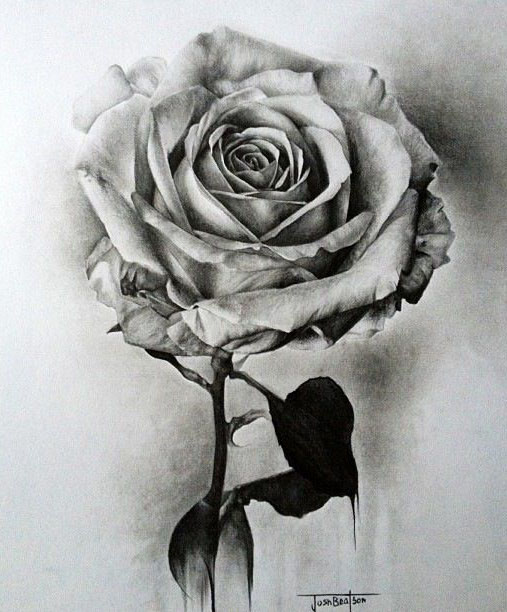 35 Beautiful Flower Drawings and Realistic Color Pencil Drawings ...