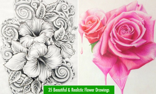 35 beautiful flower drawings and realistic color pencil drawings flower drawings mightylinksfo
