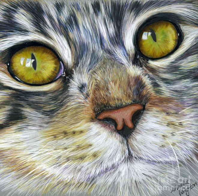 30 beautiful cat drawings best color pencil drawings and paintings world of arts. Black Bedroom Furniture Sets. Home Design Ideas