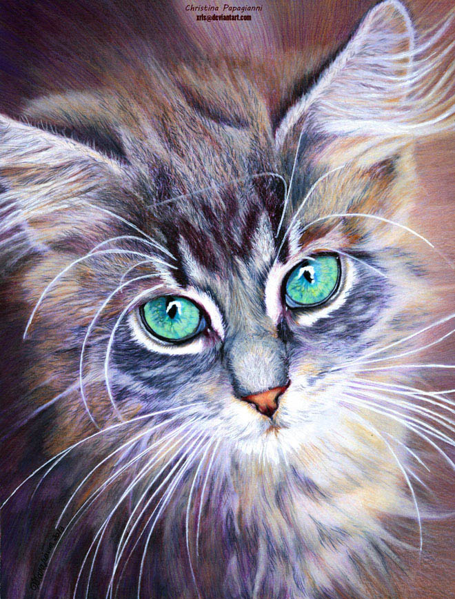 25 hyper realistic color pencil drawings by christina