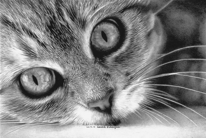 30 Beautiful Cat Drawings - Best Color Pencil Drawings and ...