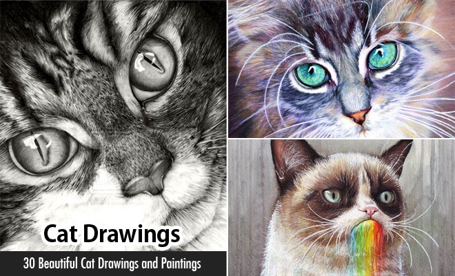 30 Beautiful Cat Drawings – Best Color Pencil Drawings and Paintings