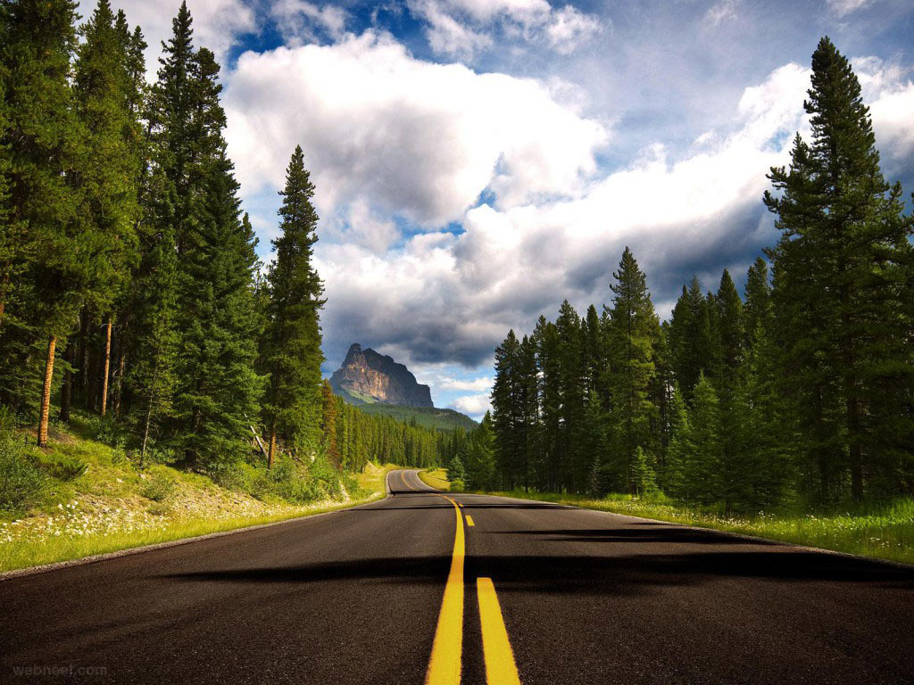 8 Forest Road Landscape Photography World Of Arts