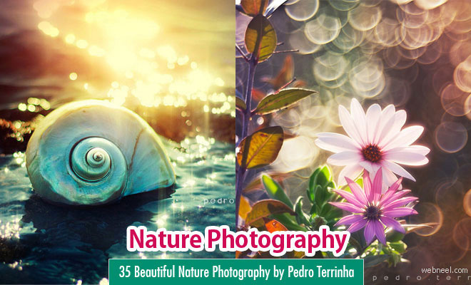 35 Beautiful Nature Photography by Pedro Terrinha – Colorful Showcase