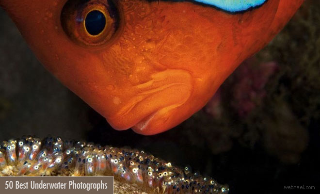 50 Incredible Award Winning Underwater Photography examples