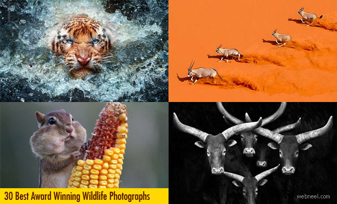 22 Best Wildlife Photography examples from top photographers