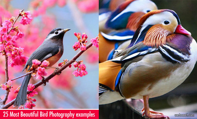 50 Most Beautiful Bird Photography examples for your inspiration