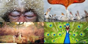 30 Award Winning Wild life Photography examples for your inspiration